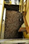 On grille les grains de café.